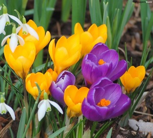 spring-flowers 02