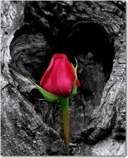 Unpredictable Love Love Letter Daily
